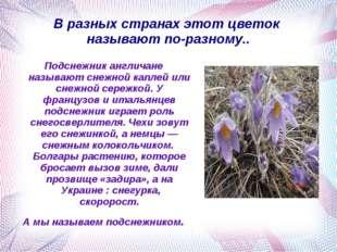 В разных странах этот цветок называют по-разному.. Подснежник англичане назыв
