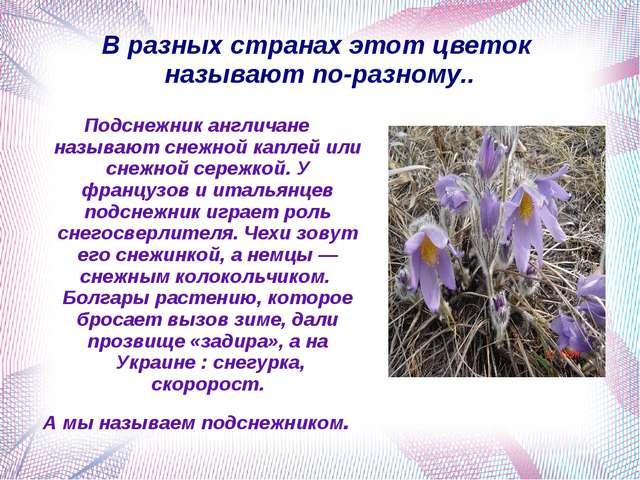 В разных странах этот цветок называют по-разному.. Подснежник англичане назыв...