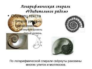 Логарифмическая спираль «Удивительное рядом» По логарифмической спирали свёрн