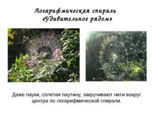 Логарифмическая спираль «Удивительное рядом» Даже пауки, сплетая паутину, зак