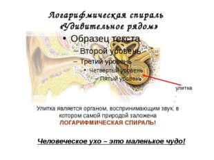 Логарифмическая спираль «Удивительное рядом» улитка Человеческое ухо – это ма