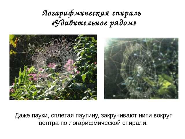 Логарифмическая спираль «Удивительное рядом» Даже пауки, сплетая паутину, зак...