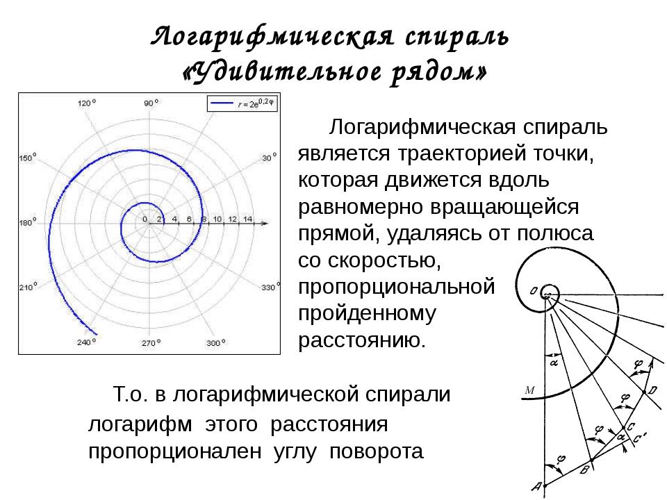 Логарифмическая спираль «Удивительное рядом» Логарифмическая спираль является...