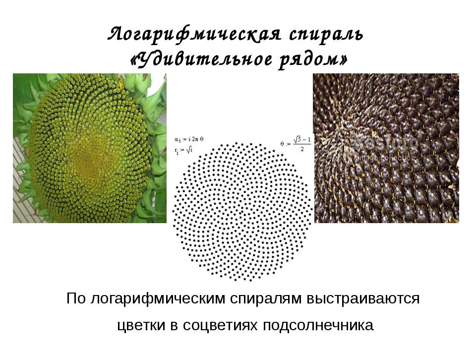 Логарифмическая спираль «Удивительное рядом» По логарифмическим спиралям выст...