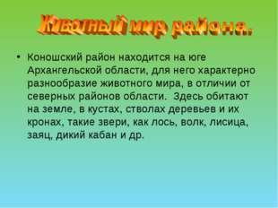 Коношский район находится на юге Архангельской области, для него характерно