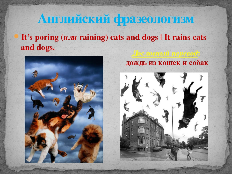 It's poring (или raining) cats and dogs | It rains cats and dogs. Английский...
