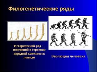 Филогенетические ряды Исторический ряд изменений в строении передней конечнос