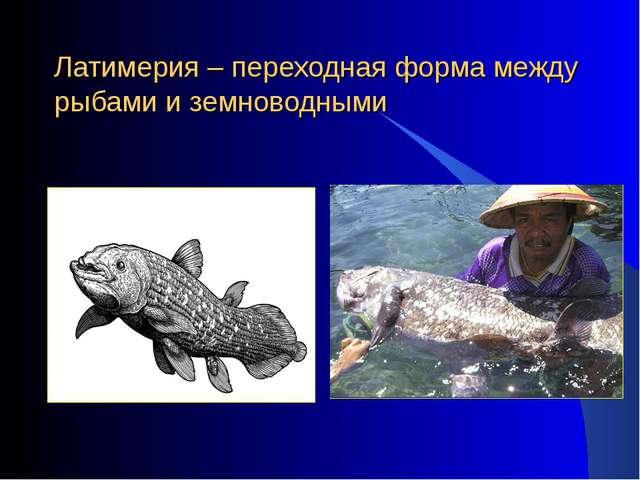 Латимерия – переходная форма между рыбами и земноводными