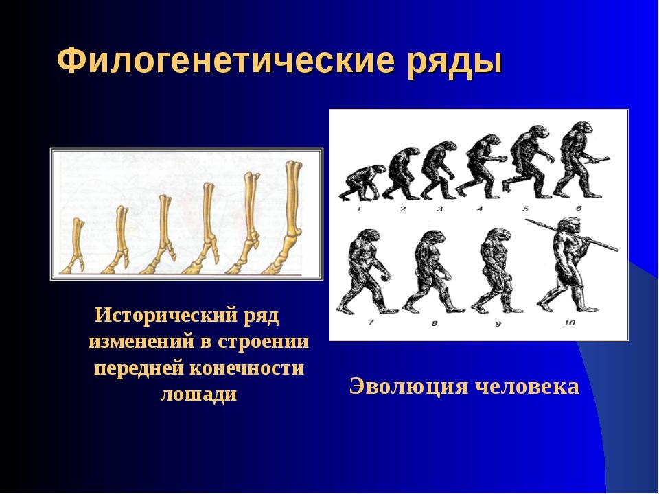 Филогенетические ряды Исторический ряд изменений в строении передней конечнос...
