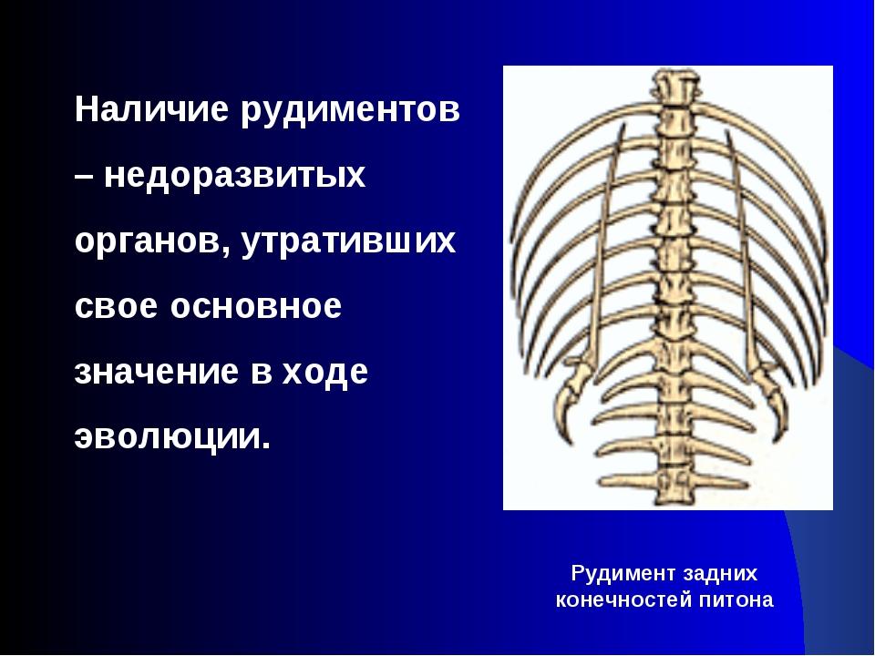 Наличие рудиментов – недоразвитых органов, утративших свое основное значение...