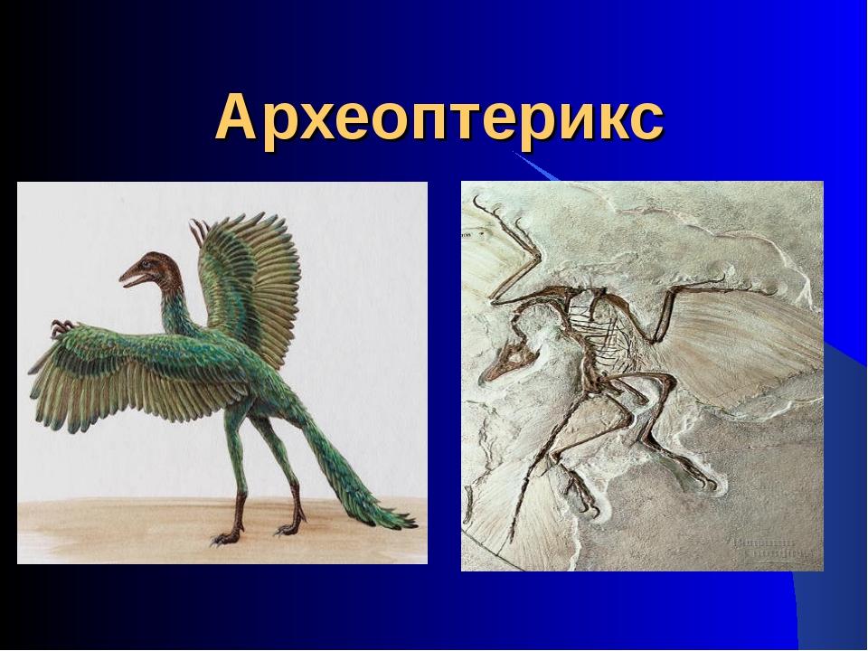 Археоптерикс