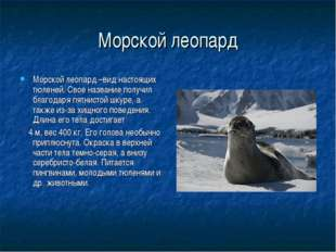 Морской леопард Морской леопард –вид настоящих тюленей. Свое название получил