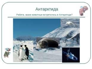 Антарктида Ребята, какие животные встретились в Антарктиде?