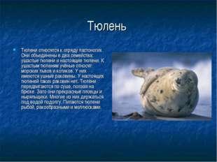 Тюлень Тюлени относятся к отряду ластоногих. Они объединены в два семейства: