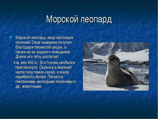 Морской леопард Морской леопард –вид настоящих тюленей. Свое название получил...