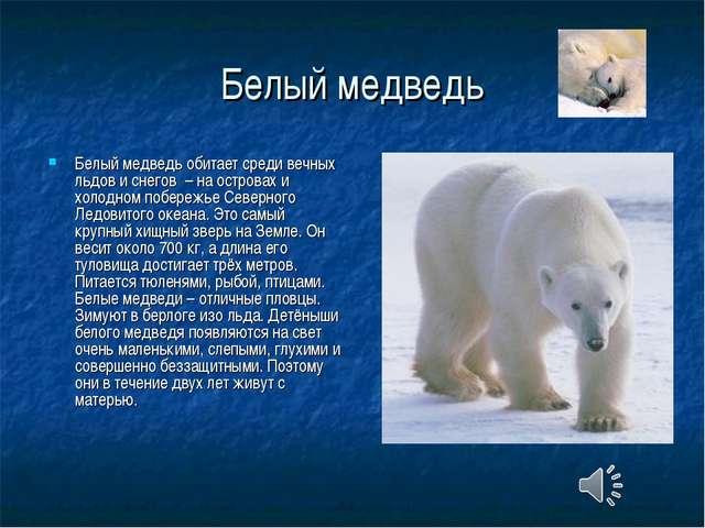 Белый медведь Белый медведь обитает среди вечных льдов и снегов – на островах...
