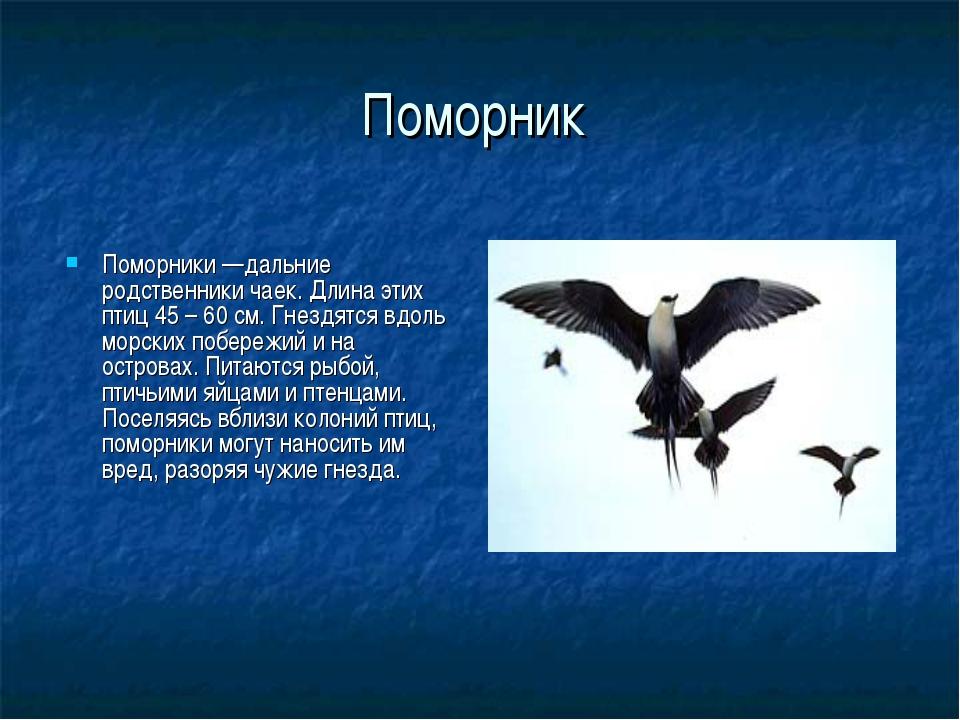 Поморник Поморники —дальние родственники чаек. Длина этих птиц 45 – 60 см. Гн...