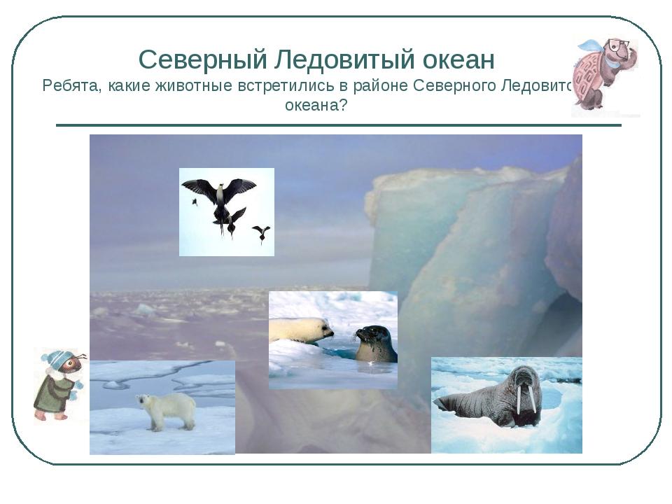Северный Ледовитый океан Ребята, какие животные встретились в районе Северног...