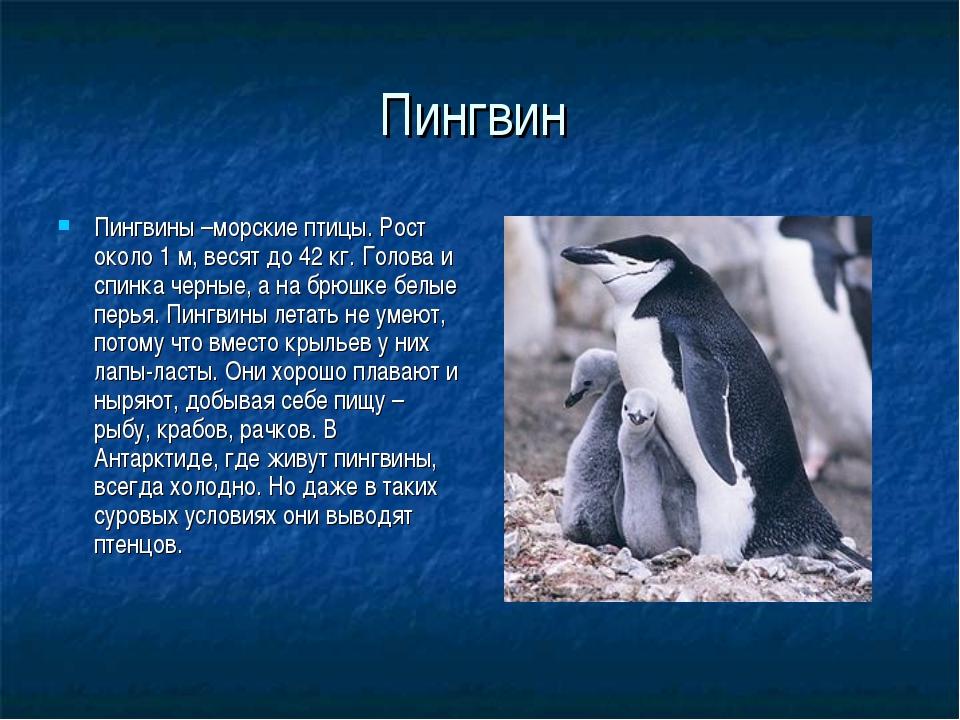 Пингвин Пингвины –морские птицы. Рост около 1 м, весят до 42 кг. Голова и спи...