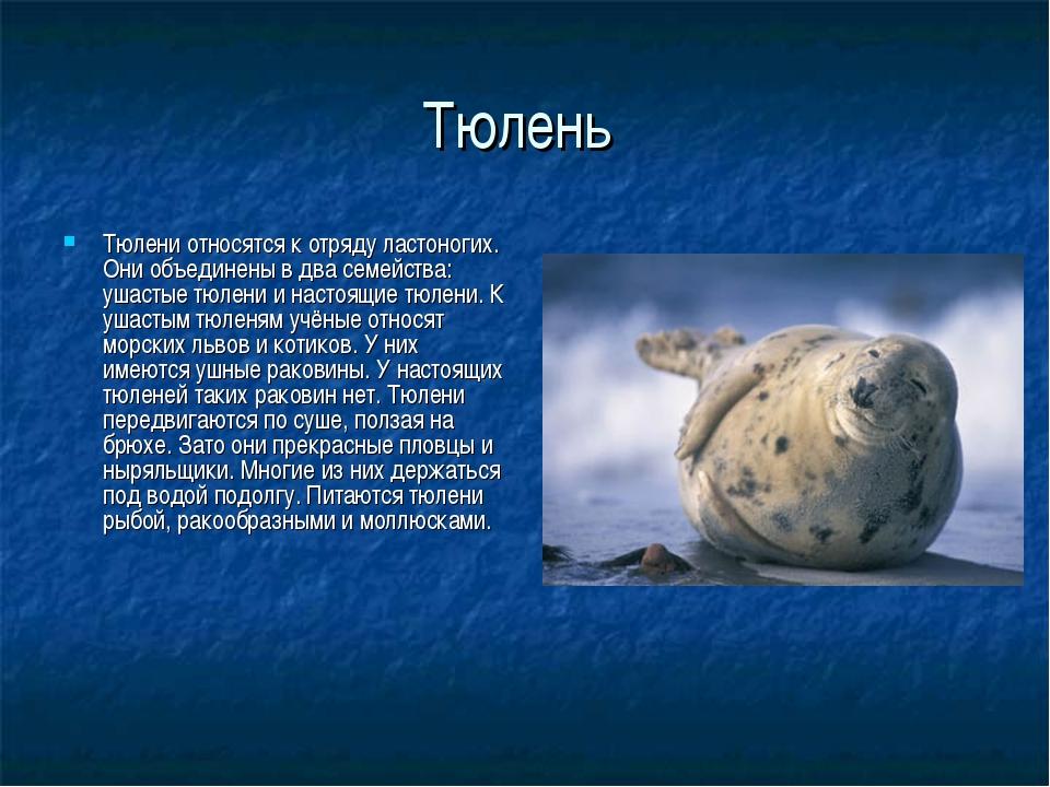 Тюлень Тюлени относятся к отряду ластоногих. Они объединены в два семейства:...