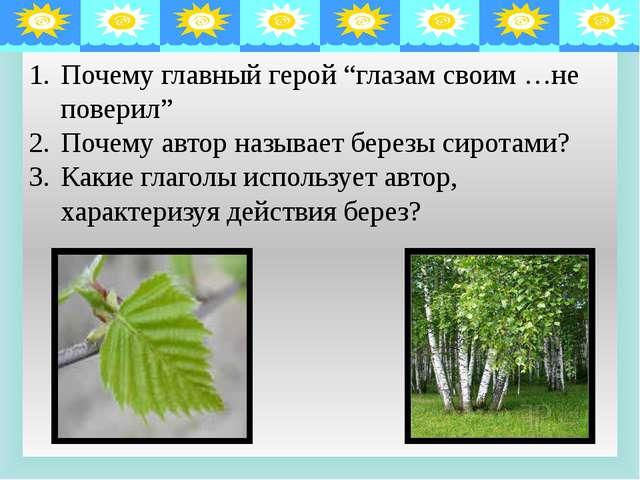 Описание берез. Стволы Ветви Листва Толщиной с детскую руку, белые; пестрели...