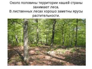 Около половины территории нашей страны занимают леса. В лиственных лесах хоро
