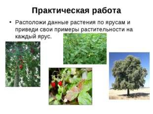 Практическая работа Расположи данные растения по ярусам и приведи свои пример