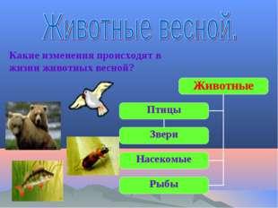 Животные Звери Насекомые Рыбы Птицы Какие изменения происходят в жизни животн