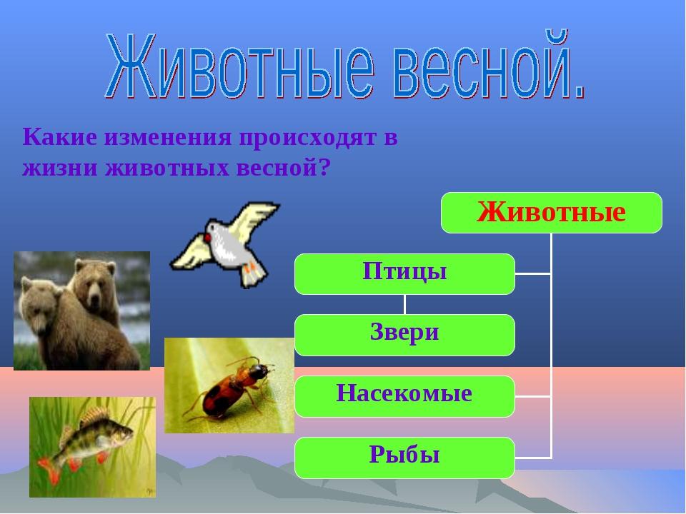 Животные Звери Насекомые Рыбы Птицы Какие изменения происходят в жизни животн...