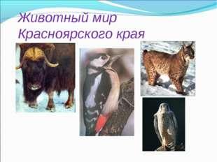 Животный мир Красноярского края