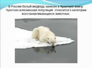 В России белый медведь занесен вКрасную книгу. Чукотско-аляскинская популяци