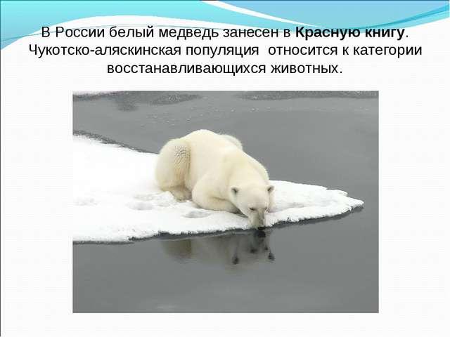 В России белый медведь занесен вКрасную книгу. Чукотско-аляскинская популяци...