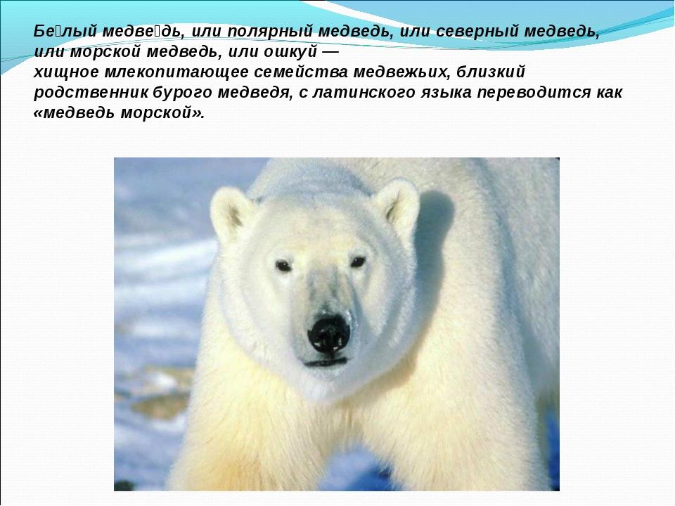 Бе́лый медве́дь, илиполярный медведь, илисеверный медведь, илиморской медв...
