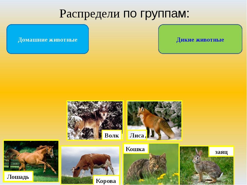 Распредели по группам: Дикие животные Домашние животные Лиса Волк Корова Кошк...