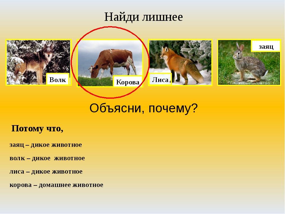 Найди лишнее Объясни, почему? Потому что, заяц – дикое животное волк – дикое...