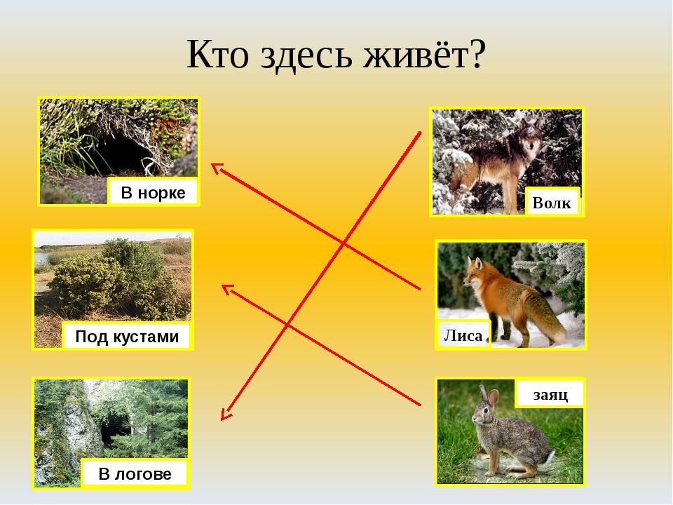 Кто здесь живёт? Волк Лиса заяц В норке Под кустами В логове
