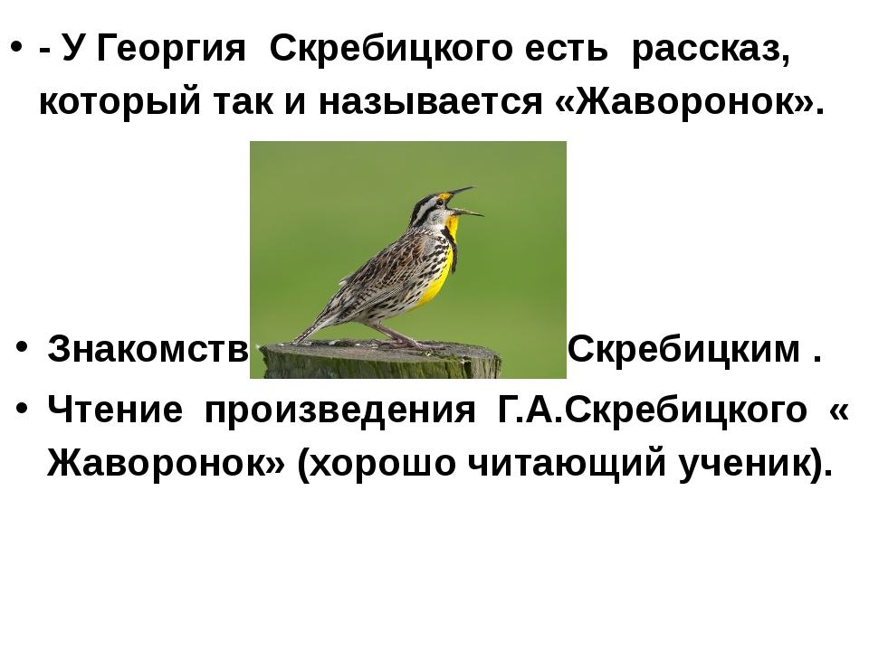 - У Георгия Скребицкого есть рассказ, который так и называется «Жаворонок». З...