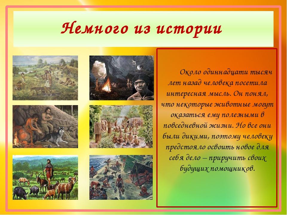 Немного из истории Около одиннадцати тысяч лет назад человека посетила интере...