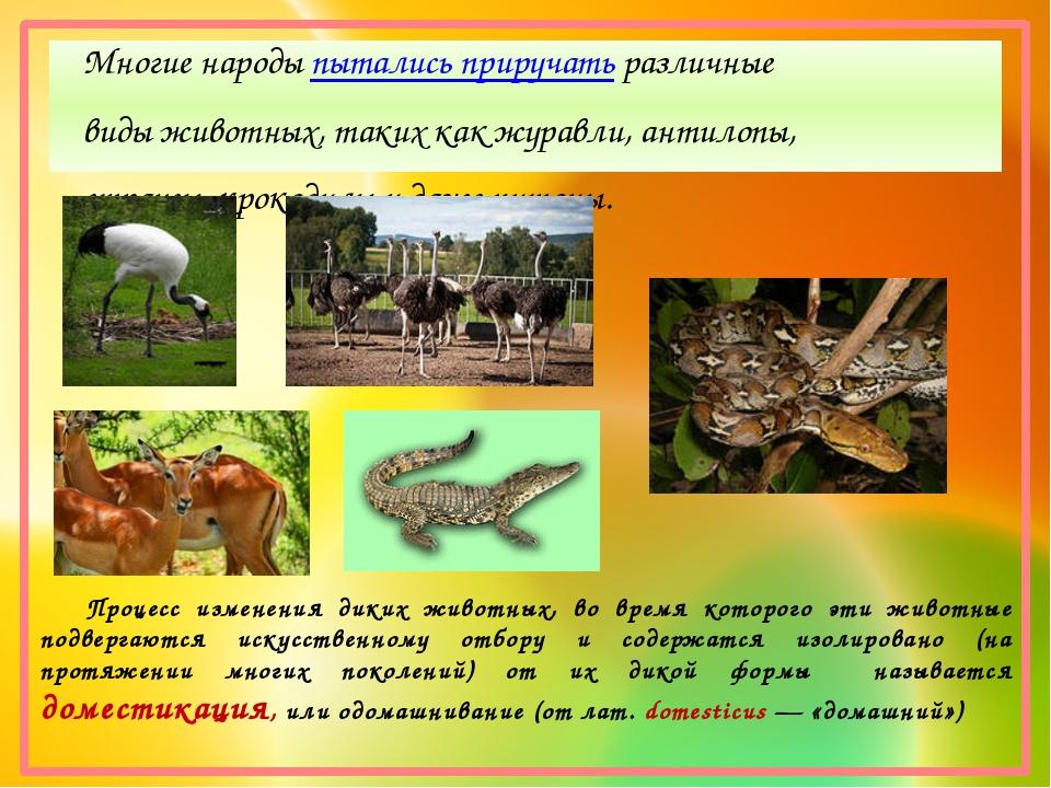 Многие народыпытались приручатьразличные виды животных, таких как журавли,...