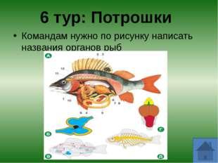В какой рыбе можно увидеть свое отражение? - зеркальный карп Какая рыба, пост