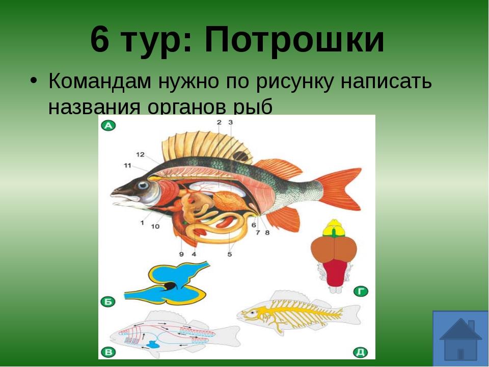 В какой рыбе можно увидеть свое отражение? - зеркальный карп Какая рыба, пост...