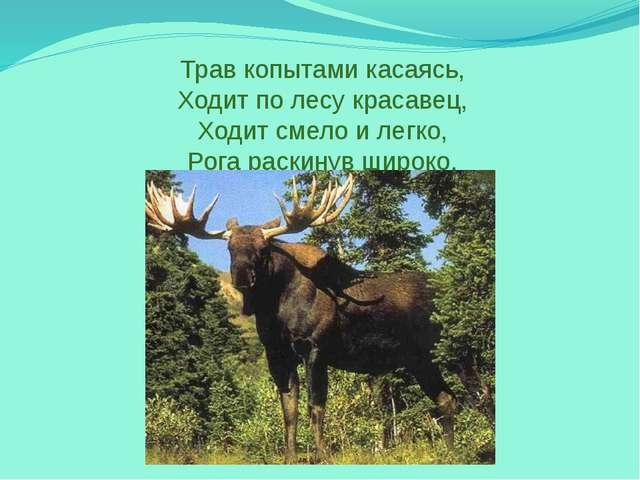 Трав копытами касаясь, Ходит по лесу красавец, Ходит смело и легко, Рога раск...