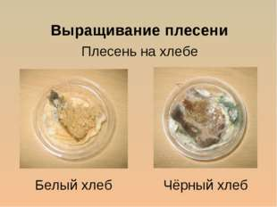 Выращивание плесени Плесень на хлебе Белый хлеб Чёрный хлеб