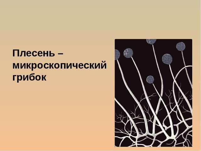 Плесень – микроскопический грибок