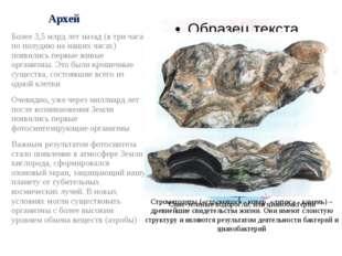 Архей Более 3,5 млрд лет назад (в три часа по полудню на наших часах) появили
