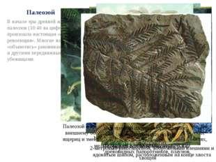Палеозой В начале эры древней жизни – палеозоя (10:40 на циферблате) – произо