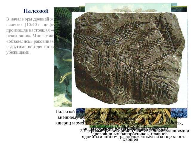 Палеозой В начале эры древней жизни – палеозоя (10:40 на циферблате) – произо...