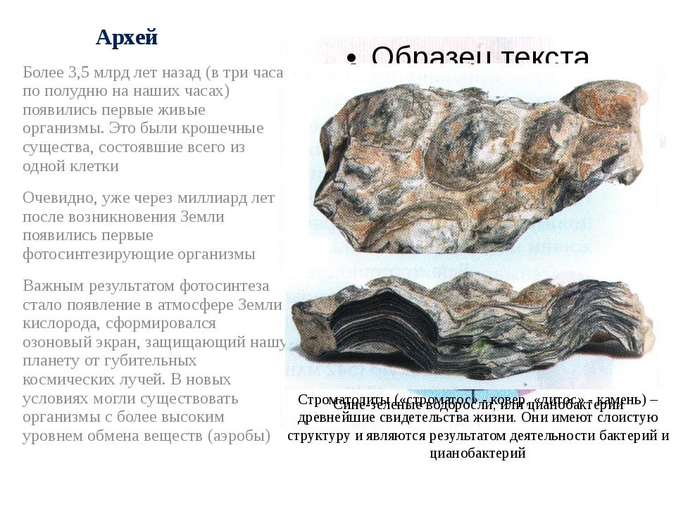Архей Более 3,5 млрд лет назад (в три часа по полудню на наших часах) появили...