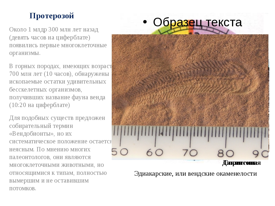 Протерозой Около 1 млдр 300 млн лет назад (девять часов на циферблате) появил...