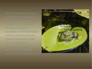 Фауна Кубани включает 11 видов земноводных из отрядов Хвостатых и Бесхвостых,